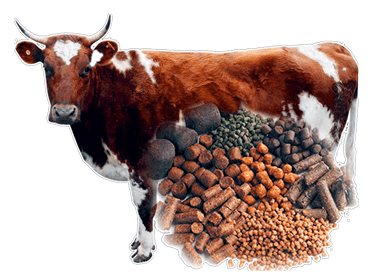 How to Start A Cattle Feed Plan