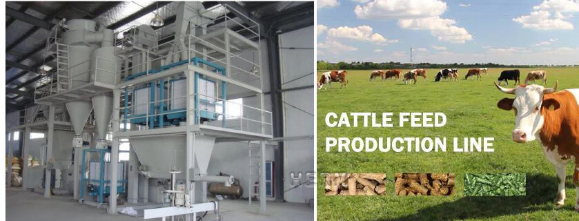 cattle feed plant supplier